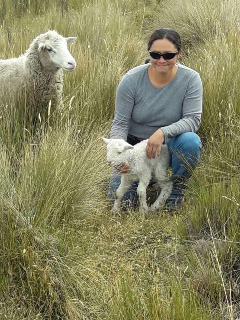 Una oveja bebe y su mamá en el páramo del Ecuador.