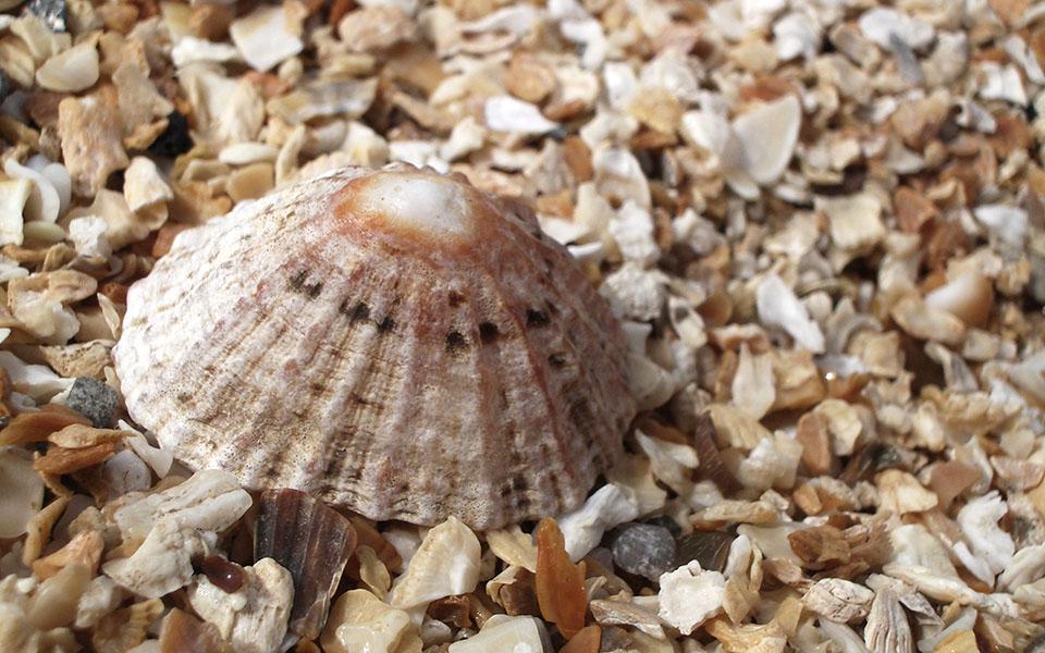 Casa Gangotena's seashell