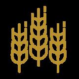 icon-casa-gangotena-brewery